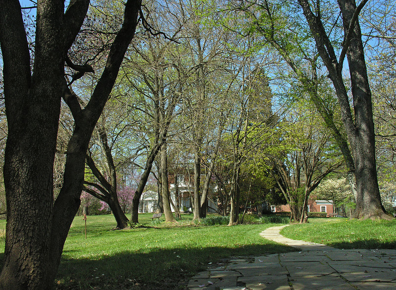 View from hemlock grove in spring<br /> Woodend Sanctuary, Chevy Chase, MD