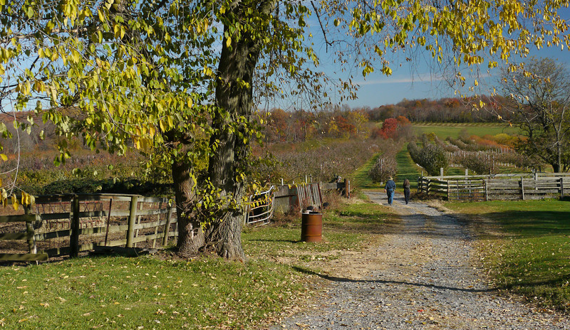 Walkway into Kingsbury's Orchard<br /> Dickerson, MD