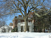American tulip tree (<I>Liriodendron tulipifera</I>) and portico in winter Woodend Sanctuary, Chevy Chase, MD
