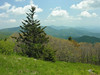 View from Appalachian Trail<br /> Carvers Gap, Pisgah-Cherokee National Forest, NC