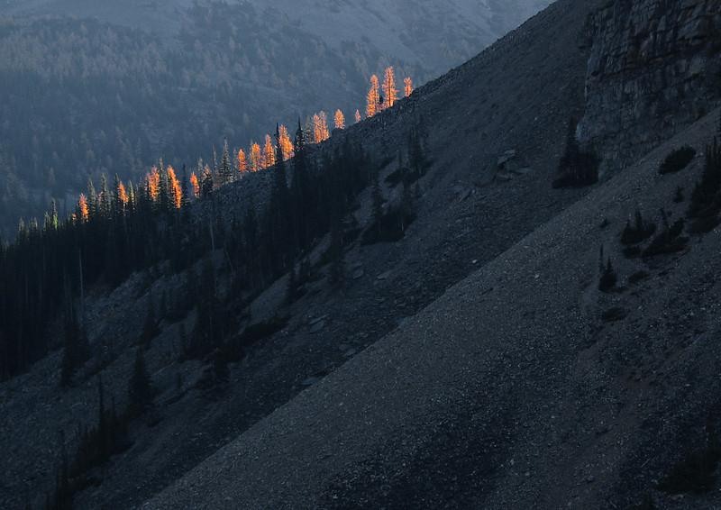 Sunrise striking larches on ridge above Moraine Lake<br /> Banff National Park, Alberta, Canada