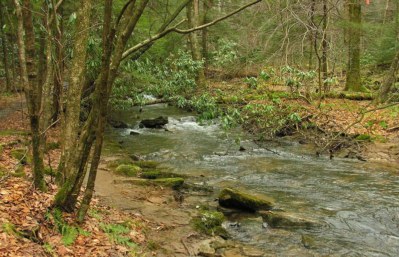 Creek along hemlock trail<br /> Cathedral State Park, Aurora, WV