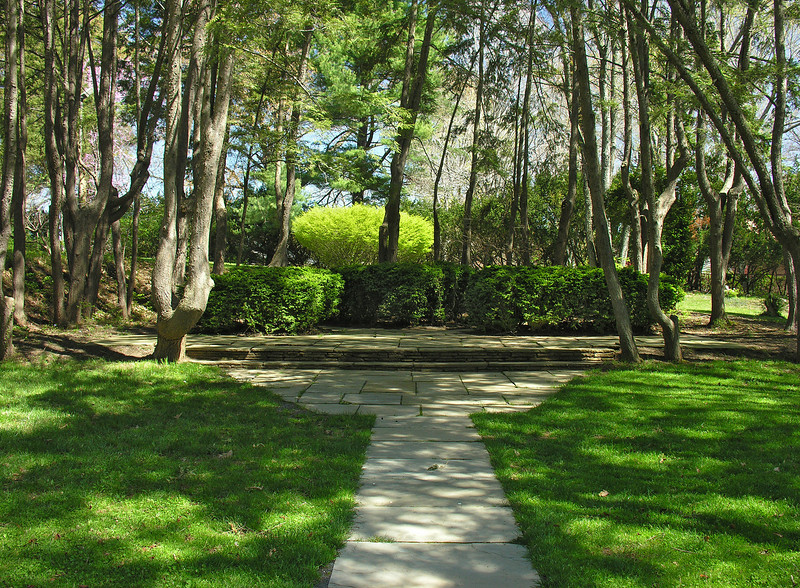 Hemlock grove in spring<br /> Woodend Sanctuary, Chevy Chase, MD