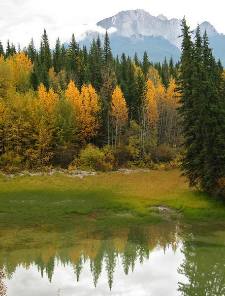 Autumn foliage at Muleshoe Lake<br /> Banff National Park, Alberta, Canada