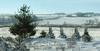 Winter prairie<br /> Verona, WI