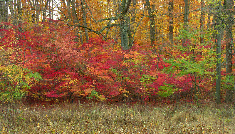 Woodland edge in autumn (2)<br /> Woodend Sanctuary, Chevy Chase, MD