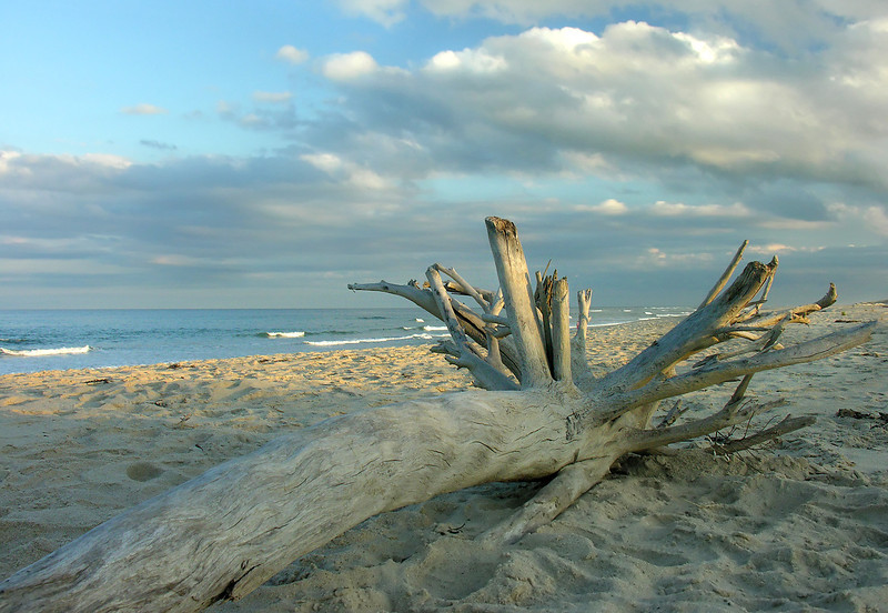 Driftwood on Coast Guard Beach<br /> Cape Cod National Seashore, Eastham, Cape Cod, MA