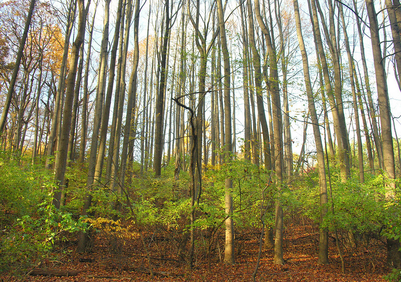 Woods near pond in autumn<br /> Woodend Sanctuary, Chevy Chase, MD
