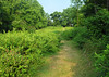 East meadow in summer<br /> Woodend Sanctuary, Chevy Chase, MD