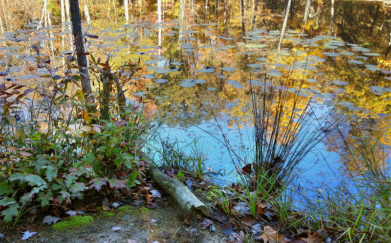 """Rieve's Pond on the North Tract <I><span class=""""nonNative"""">(iPhone photo)</span></I> Patuxent Research Refuge, Laurel, MD"""