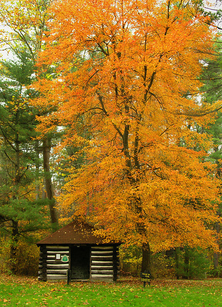 Red maple & historical Appalachian Trail cabin<br /> Michaux State Forest, PA