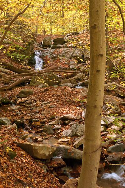 Woods along Cascade Run<br /> Patapsco Valley State Park, Elkridge, MD