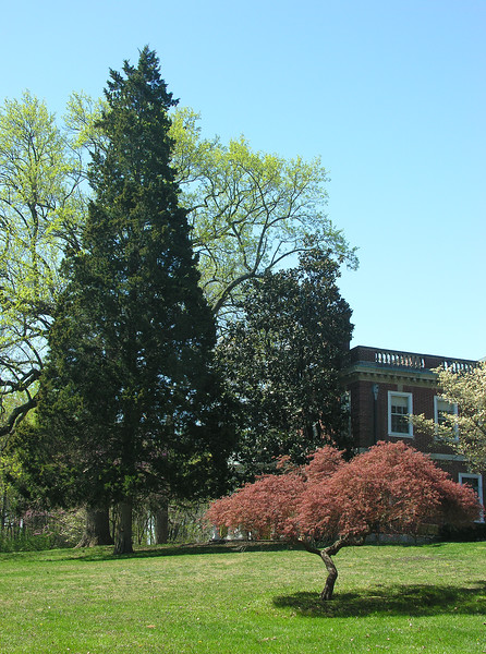 Trees at northeast corner of house<br /> Woodend Sanctuary, Chevy Chase, MD