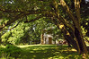 East lawn in summer<br /> Woodend Sanctuary, Chevy Chase, MD