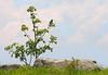 Bluebird in tree along Appalachian Trail<br /> Carvers Gap, Pisgah-Cherokee National Forest, NC/TN border