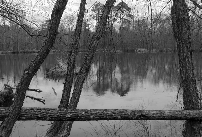 Winter at the pond (where are the ducks?)<br /> Patuxent Ponds, Anne Arundel County, MD