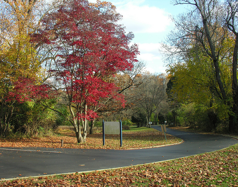 Japanese maple at entrance in autumn<br /> Woodend Sanctuary, Chevy Chase, MD