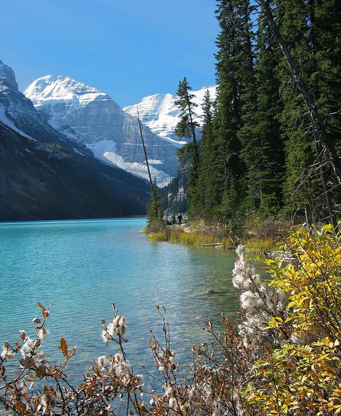 Wildflowers along Louise Lakeshore trail<br /> Banff National Park, Alberta, Canada