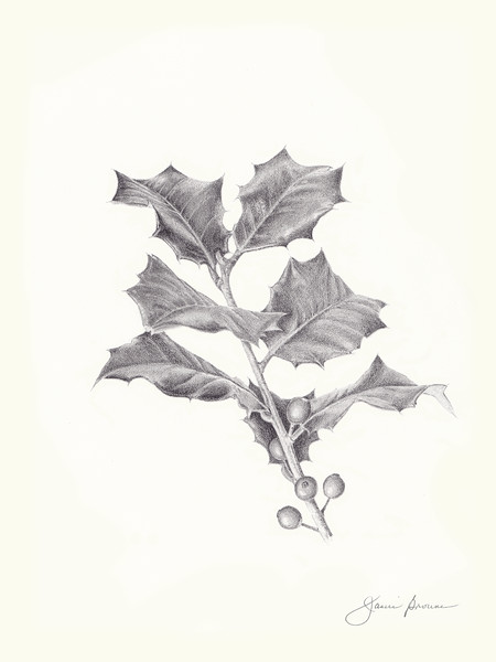 "<i>American Holly</i>  (2016) Graphite - 9"" x 12"""