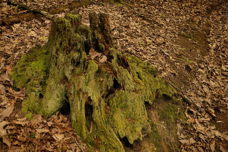 Decaying tree trunk along Hemlock Hollow trail<br /> R. R. Guest Shenandoah River State Park, Bentonville, VA