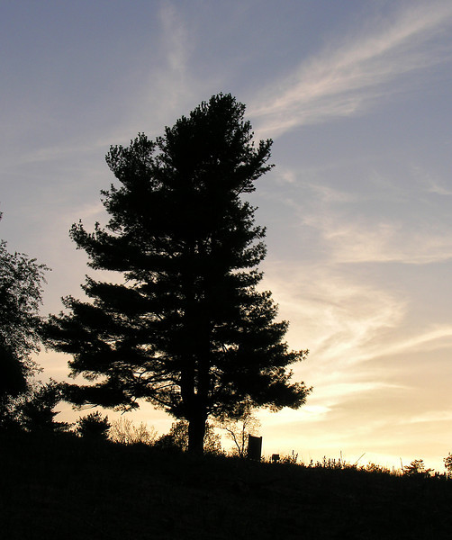 Tree silhouetted against sunset on the ridge<br /> Shenandoah National Park, VA