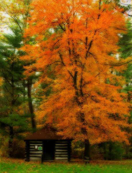 Red maple &amp; historical Appalachian Trail cabin <i>(painterly Orton effect)</i> Michaux State Forest, PA