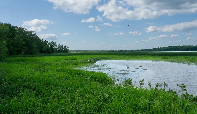 Freshwater tidal estuary and marsh<br /> Jug Bay Natural Area, Patuxent River Park, Upper Marlboro, MD