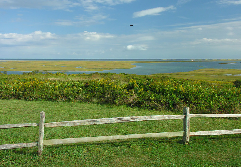 Fall wildflowers & Nauset Marsh<br /> Fort Hill, Eastham, Cape Cod, MA