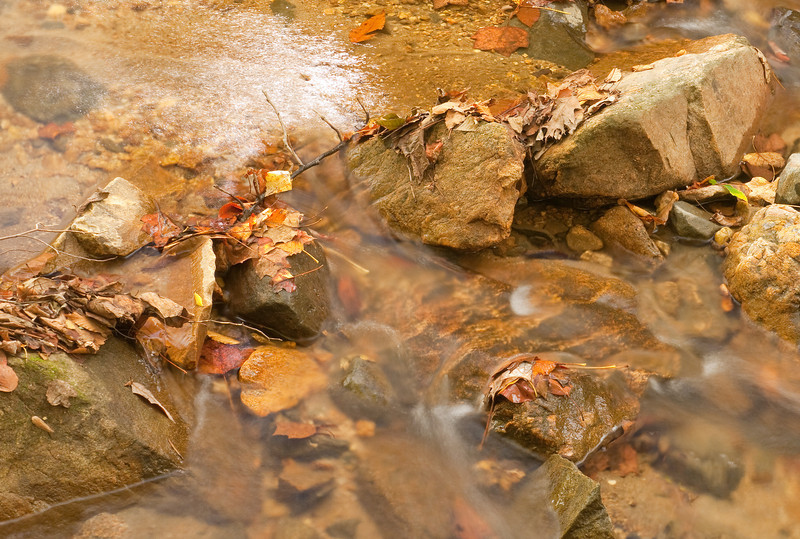 Leaves caught on rock in Cascade Run<br /> Patapsco Valley State Park, Elkridge, MD
