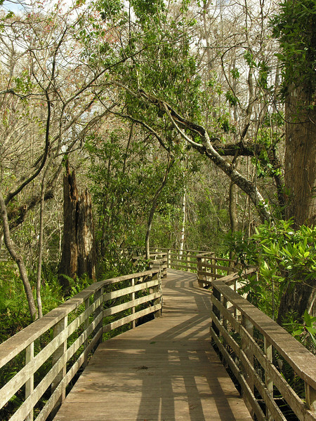 Boardwalk trail<br /> Corkscrew Swamp Sanctuary, FL