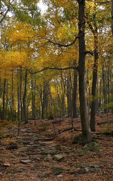 Trail to summit<br /> Sugarloaf Mountain, Barnesville, MD