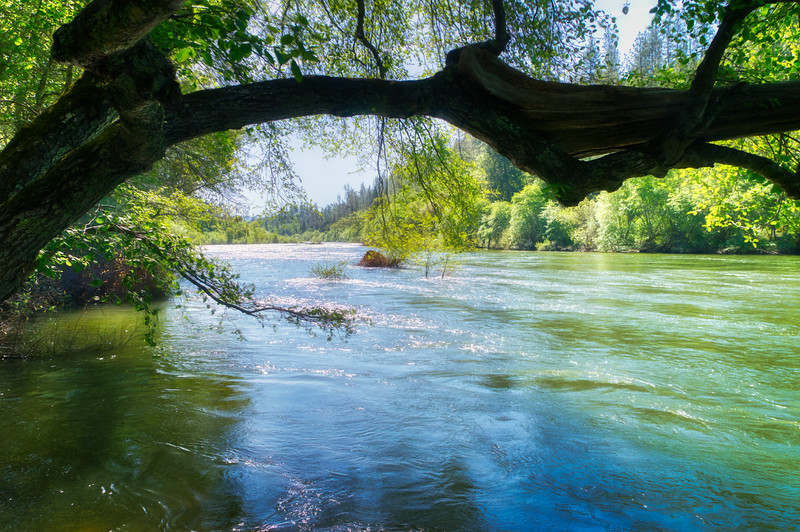 Spring along the North Fork of the American River