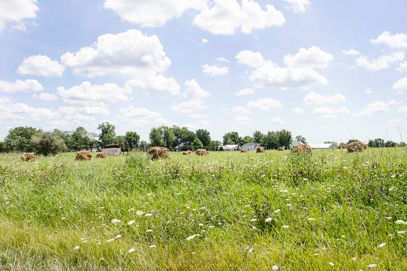 Amish 10
