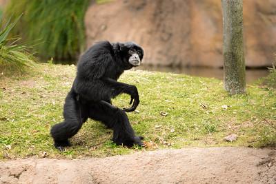 Monkey 2-585