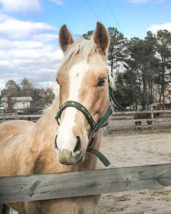 horse 2-2490