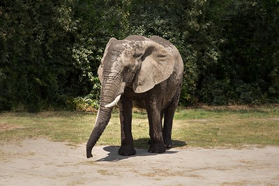 Elephant 2-