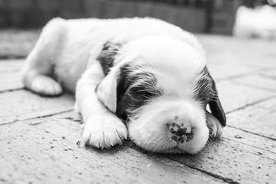 puppy-