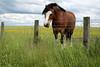 ZO 44 Horse & Fence