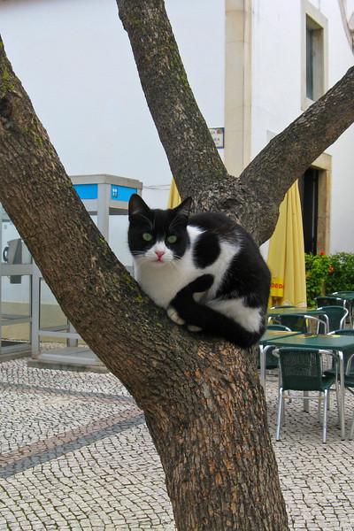 ZO 57 Cat Up a Tree