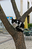 ZO 57 Cat Up a Tree
