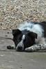 ZO 58 Sad Dog
