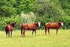 SC 31 Three Horses