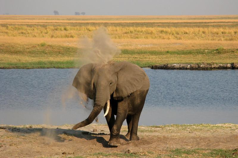 ZO  69 Elephant