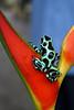 ZO 29 Green Frog