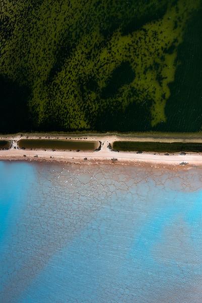 Where the Forest Meets the Ocean (Algae & Salt)