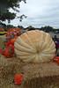 SC 288 914 Pound Giant Gourd SAM_0106