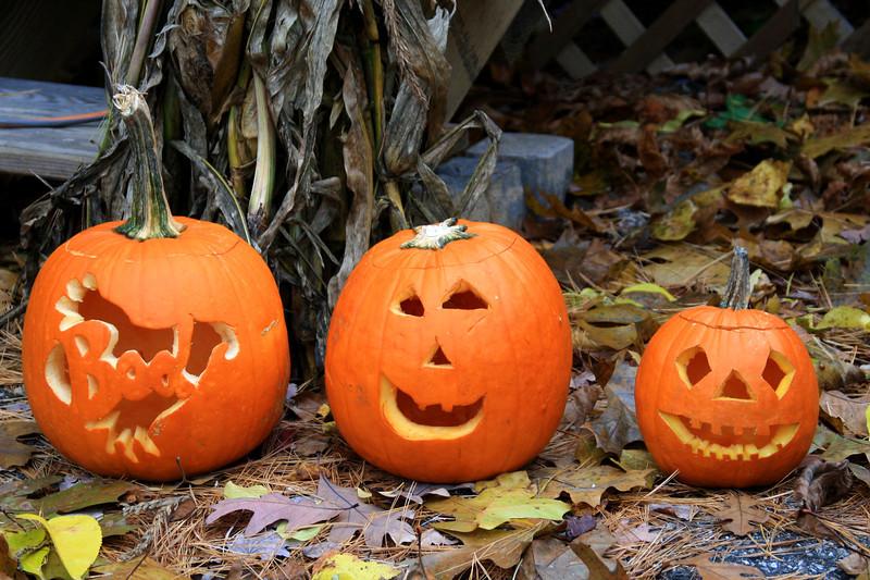 SC 157 Three Smiling Pumpkins
