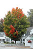 SC 303 Hollis Village in Autumn SAM_0132