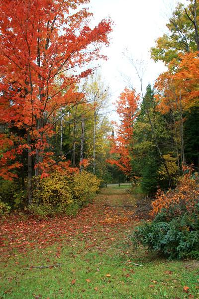 SC 61 Autumn Path, NH
