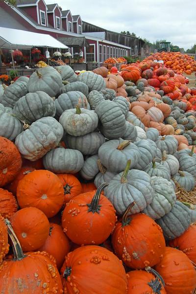 SC 286 Abundant Harvest SAM_0108